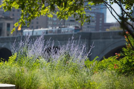Charles River Conservancy Learn and Discover Image