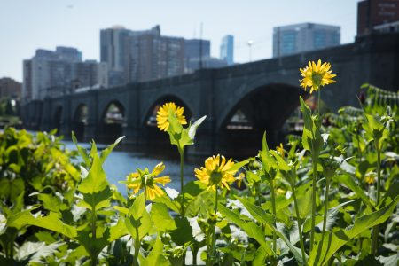 Charles River Conservancy Ways to Give